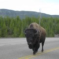 Motorcycle Safety in Yellowstone Park