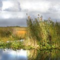 Hotels Near the Florida Everglades