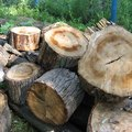 Alternatives to Firewood