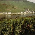 Tours Along the Mosel River in Germany