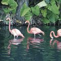 Photography Tours of the Everglades