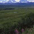 Travel Guide for Sightseeing, Hiking & Other Activities at Denali National Park