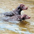 Beaches Where Dogs Can Swim Near Annapolis, Maryland