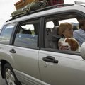 How to Travel by Land With Pets