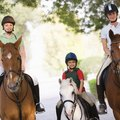 Horseback Riding Stables in Niles, Illinois