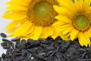 Roasted Sunflower Seeds Nutrition