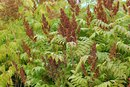 How to Compost Sumac
