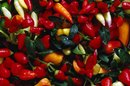 How to Take Care of Oriental Peppers