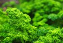 What is Parsley Herb Good for Nutritionally?