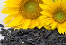 Do Sunflower Seeds Have All of the Essential Amino Acids?