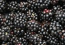 How Much Vitamin K Is in Blackberries?