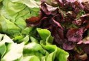 The Best Ways to Eat Raw Vegetables