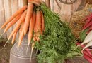 What Nutrients Do Carrots Provide?