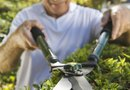 How to Clean Plant Residue from Hedge Shears
