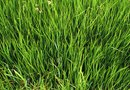 Grass Seed Types and Zones