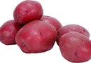 How to Grow Your Own Red Potato