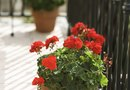 How to Remove Water Spots From Cement Caused by Flower Pots
