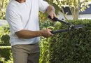 Can I Cut My Hedges That Give Neighbors Privacy?