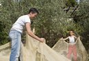 Netting to Protect Fruit Trees
