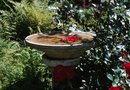 Landscape Ideas for Flowers in a Birdbath Garden