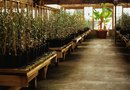 How to Grow Plants the Hydroponics Way
