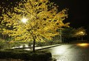 Landscape Lighting for Trees