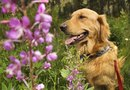 Creeper Plants That Are Safe for Dogs