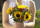When to Plant Dwarf Sunflowers Outside