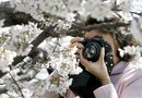 How to Care for a Shidare Yoshino Weeping Cherry
