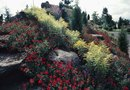 """Trees & Shrubs for Dry, Rocky Hillsides"""