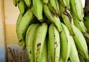 How to Prune Growing Plantains