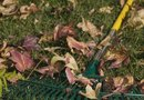 How to Get Leaves Out of Bark Chips and Flower Beds