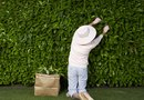 How to Use Shrubs & Hedges as Backyard Privacy Screens