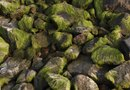 How to Rid Moss From Dirt and Rocks