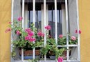 What to Plant in Southern Exposure Window Boxes