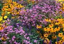 How to Arrange a Perennial Flower Bed