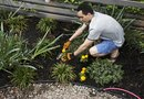 How to Kill New Weeds Coming Up in an Existing Flower Bed