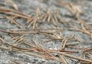 How to Get Pine Needles Out From Rock Yard