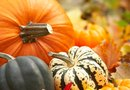 Can You Grow Squash and Pumpkins Together?