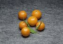 How to Grow Satsuma Tangerines in a Pot