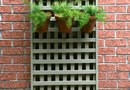 How to Grow Grapes & Vines on a Lattice