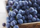 How to Grow Blue Concord Grapes