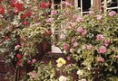 How to Design an English Rose Garden