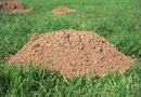 How to Get a Mole Out of Your Yard With Cat Litter