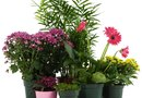 Ideas for Flowerpots