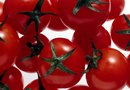 How to Care for Potted Tomato Plants