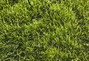 How to Adjust the pH of a Lawn With Sulfur