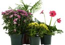 How to Keep Potted Plants Moist Outside for a Week