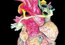 Are Potassium & Sodium Related to the Heart's Contraction?