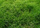 How to Put Down Fungicide on Grass